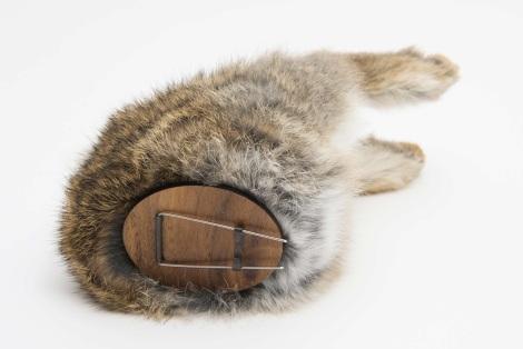 bunny2_470